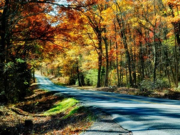 Shenandoah Road
